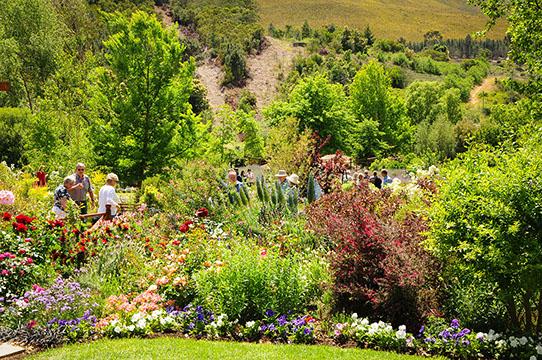 Elgin Open Gardens_Elgin Valley_Grabouw_Houw Hoek_Overberg_Western Cape_Houw Hoek Outspan_10