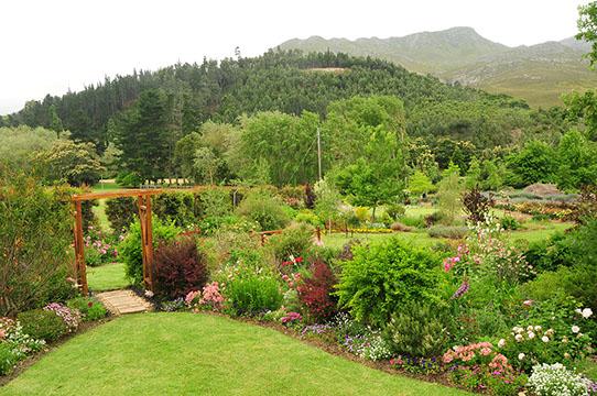 Elgin Open Gardens_Elgin Valley_Grabouw_Houw Hoek_Overberg_Western Cape_Houw Hoek Outspan_11