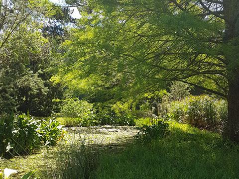 Elgin Open Gardens_Elgin Valley_Grabouw_Houw Hoek_Overberg_Wildekrans Country House_Pond